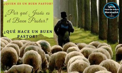 Jesús el buen pastor y el privilegio de ser sus ovejas